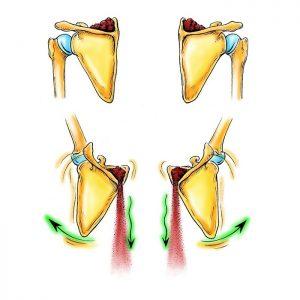 Skulderbladenes bevægelse, når du løfter armen - dynamic Imagery fra The Franklin Method